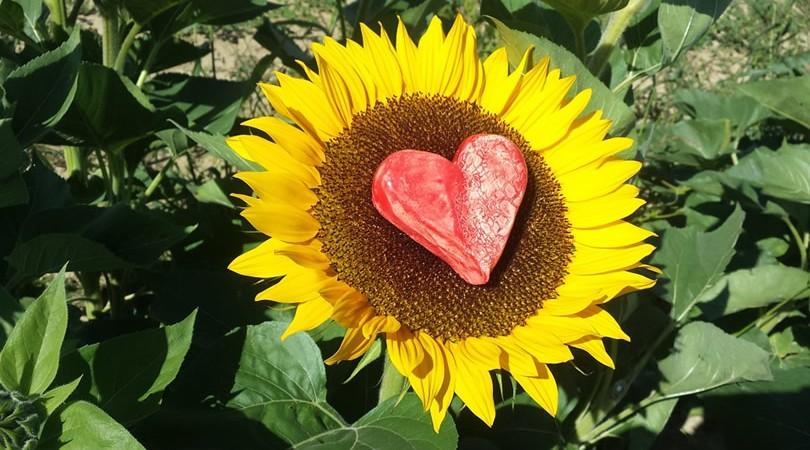 Avenir amour en ligne avec un voyant sérieux